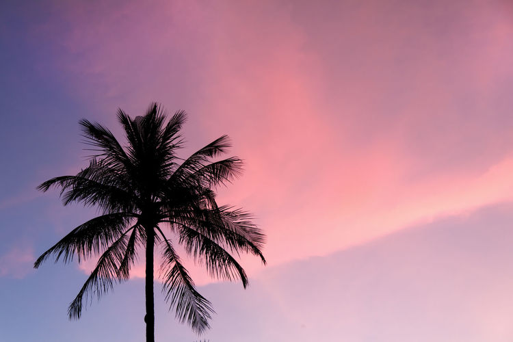 Palm tree silhouette on pink sky. Palm Pink Sky Tree Beauty In Nature Coconut Palm Tree Idyllic Leaves Nature Night Outdoors Palm Leaves Palm Tree Purple Sky Scenics Silhouette Sky Summer Nights Sunset Tranquil Scene Tranquility Tree Tree Silhouette Tree Trunk