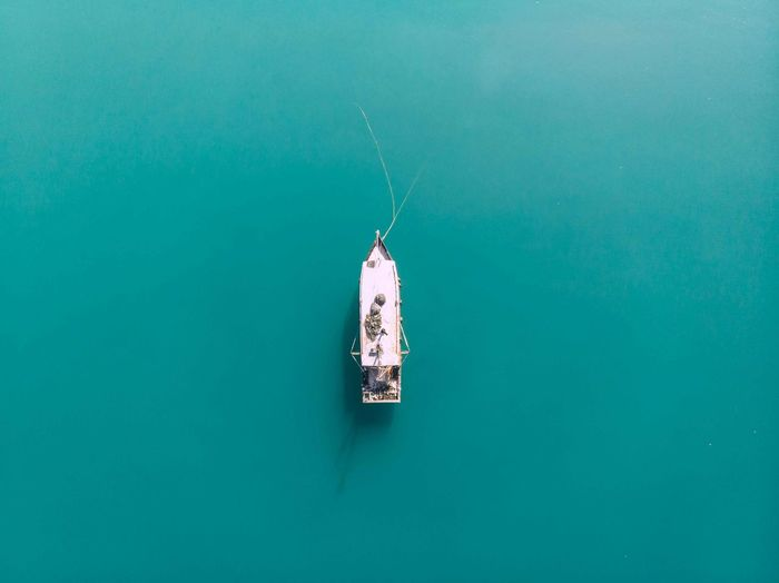 High angle view of fish hanging in sea