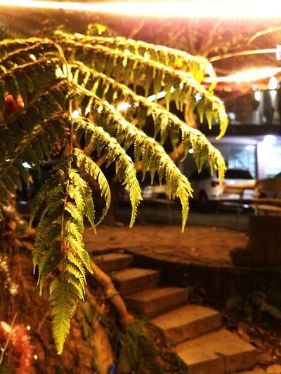 光与影的交错 Nature No People Growth Night Close-up Outdoors Beauty In Nature