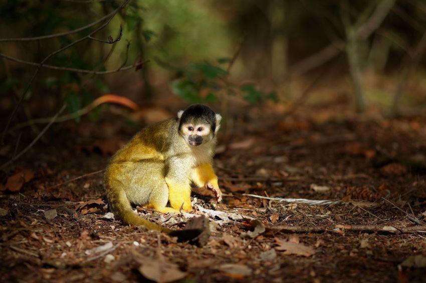 See The Light One Animal Animal Themes Animal Vertebrate Land Looking