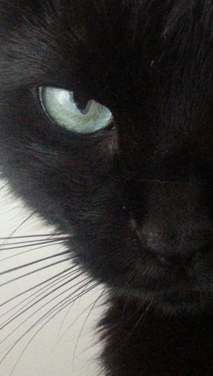 Cats Gats :))