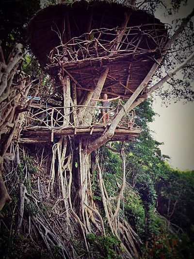 Treehouse Treehouseview Khophangan Nationalpark EyeEm Nature Lover Nature_collection Forrest Photography Taking Photos Smartphonephotography Enjoying LifeForrest Eye4photography  EyeEm Thailand That's Me Hello World Hanging Out Backpacktraveler BackpackersMemories