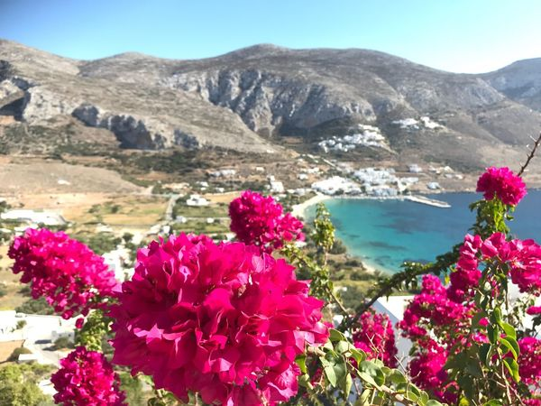 Aegiali bay, Amorgos Beauty In Nature Nature Flower Mountain Scenics Tranquil Scene Tranquility Day Outdoors No People Plant Mountain Range Water Landscape Sunlight Sky Growth Travel Destinations Clear Sky Freshness Cyclades Greekislands Amorgos Aegiali Greece