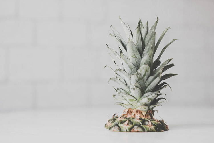 Pineapple Indoors  No People Tropical Fruit Fruit Healthy Eating Focus On Foreground Plant Wall - Building Feature Freshness Close-up Growth Food Nature Still Life Food And Drink Green Color Wellbeing Table Houseplant