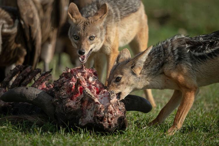 Close-up of animals feeding