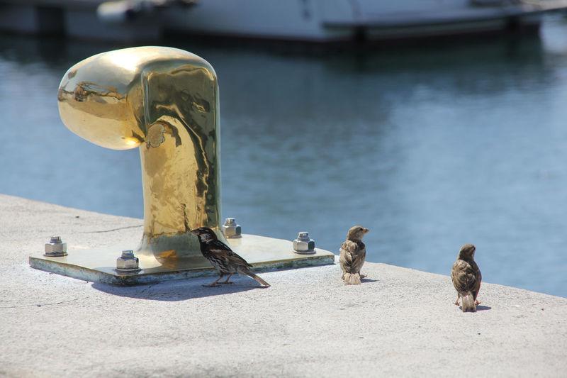Sparrows By Mooring Bollard By Sea
