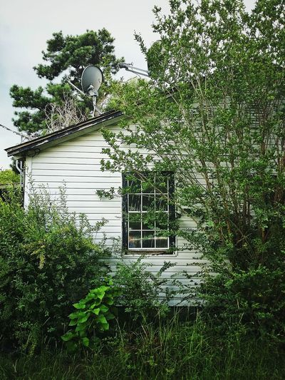 abandoned house Roof Angle Creepy Overgrown Abandoned House Window Growth Satellite Deserted Old Rural Scene Country House Tree Grass Green Color