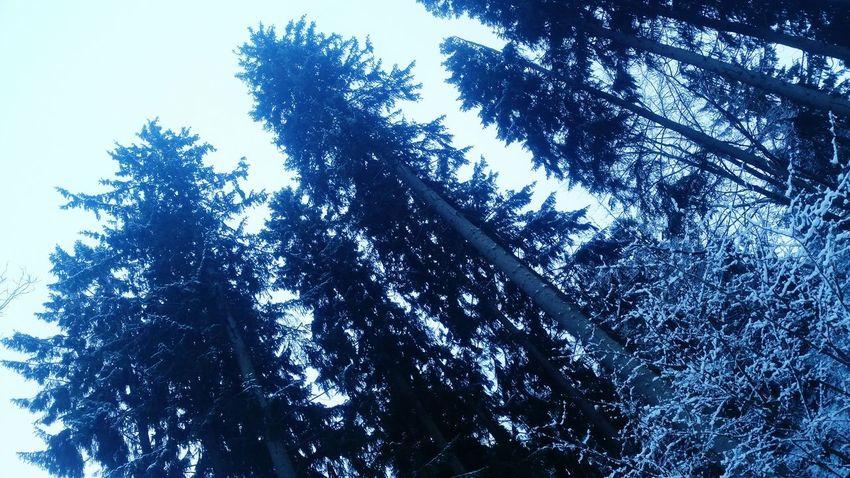 Winter Forest Walking