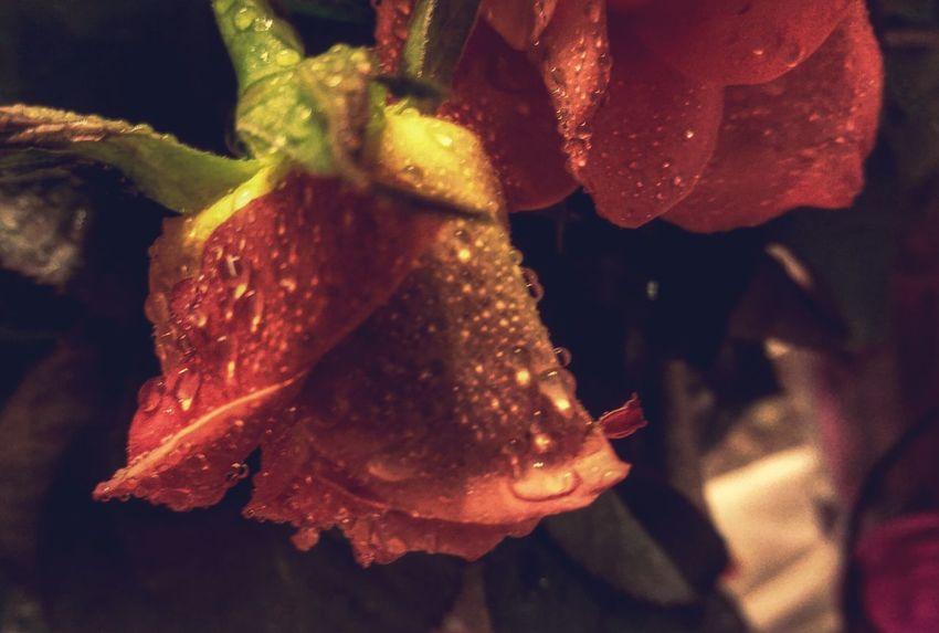 Waiting For The Rain Flower Collection Rosa Home Is Where The Art Is The Perfect Imperfect Droplets Dyinginside goodnight 🌹🍃.