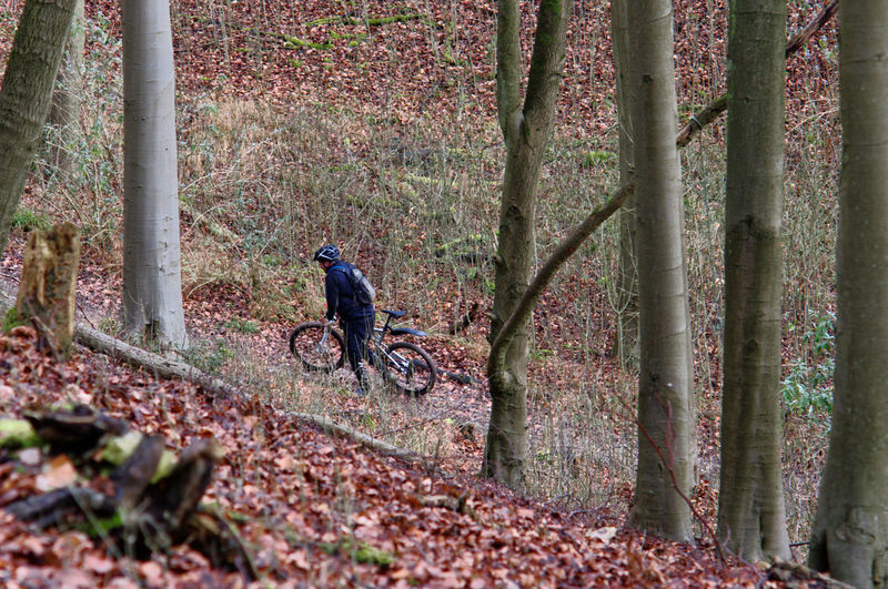 A cyclists riding through the woods at the Queen Elisabeth Country Park near Petersfield in Hampshire Bicycle Celebrate Your Ride Exercise From Above  Leaves On The Ground Petersfield Portsmouth Queen Elisabeth Country Park Recreational Pursuit Sport Trees Winter Woods