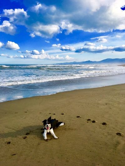 Sea Beach Sky Dog Pets Nature Happy Holiday France Border Collie Nature Photography Natureisg