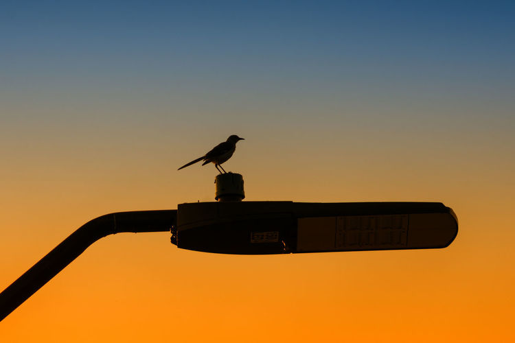 Bird On A Lamp Check This Out Hanging Out Taking Photos Bird Bird Photography Birds_collection Birds Of EyeEm  Nature Photography Nature_collection Nature Lamp Lamppost Funwithfilters Nikon Nikonphotography Eyeemphotography EyeEm Best Shots Beautiful Beauty In Nature