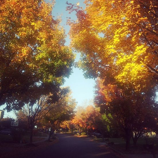 I cant believe that it is November already... this was just few days ago! 가을 낙엽 단풍 Autumn Hiscreation Beutiful