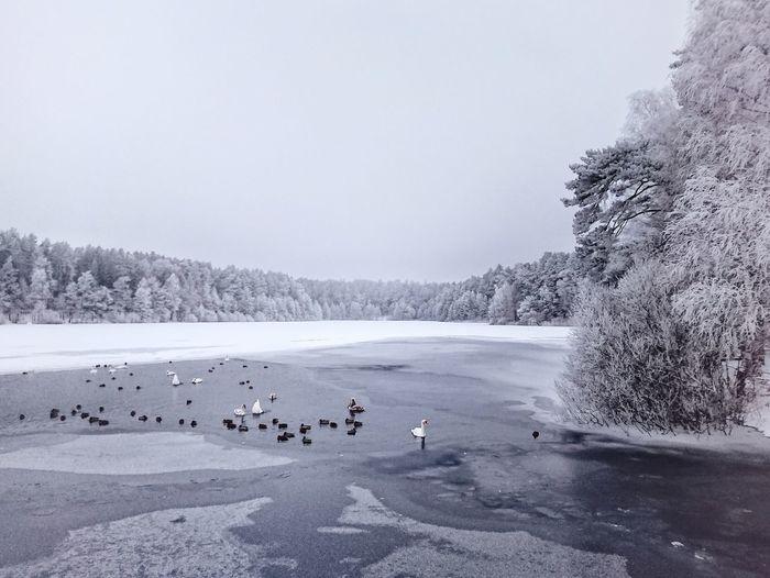 View of birds in winter