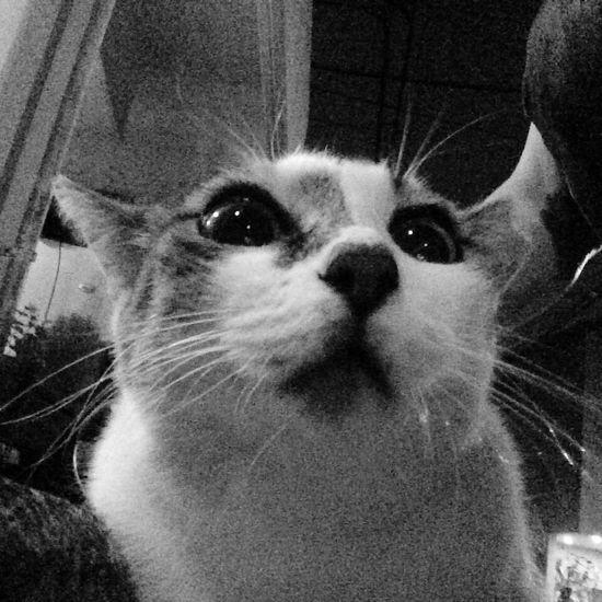 野良猫 Stray Cat 夜ねこ 前の写真♪