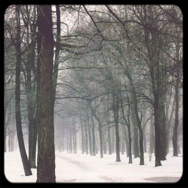 EyeEm Nature Lover Tree Winter Wonderland Analogue