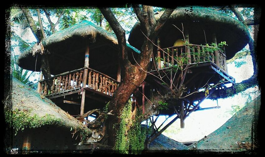 reminiscing one of the best spot in Pansol during our team building...Treehouse Sky_scapes Sky And Trees Treetasticthursday