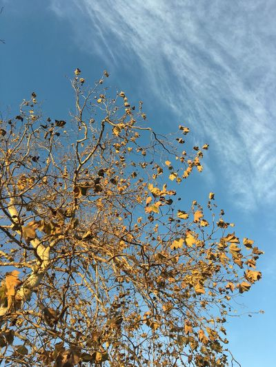 Tree Low Angle View Nature Beauty In Nature No People Day Blue Autumn Leaf Flower Branch Freshness Outdoors Sky Tranquility Growth