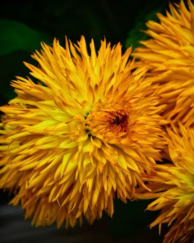 Flowering Plant Flower Petal Fragility Vulnerability  Flower Head Inflorescence No People Pollen Focus On Foreground Invertebrate Pollination Insect Nature Growth Yellow Plant Beauty In Nature Close-up Freshness