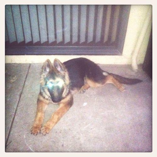 My 5 month old female dog Aera :D