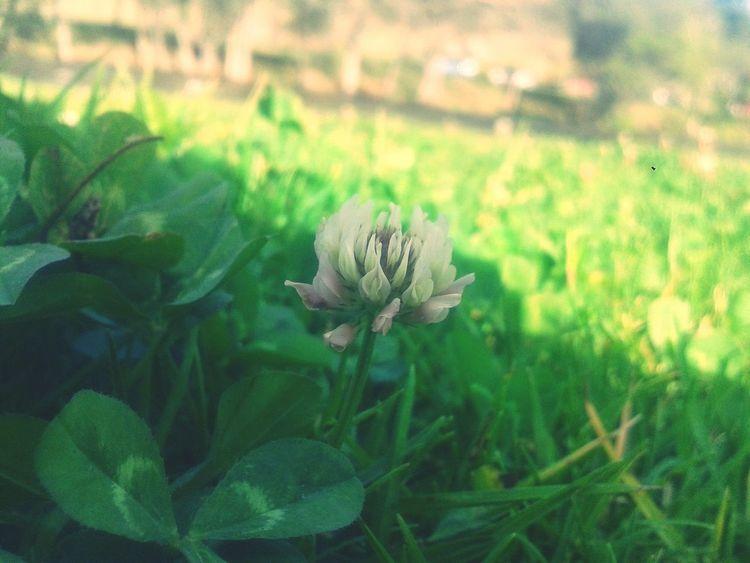 Greenworld Flower