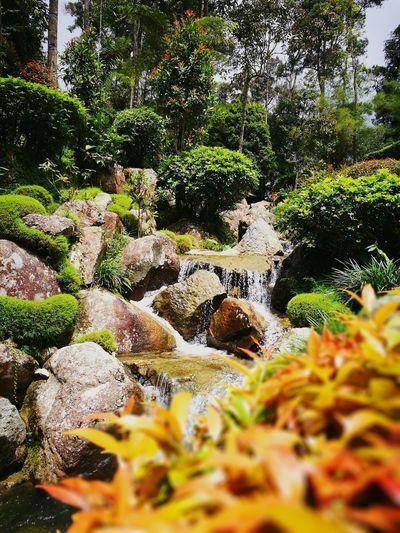 Berjaya Hills The Week On EyeEm Nature Photography Nature_perfection Photography Themes