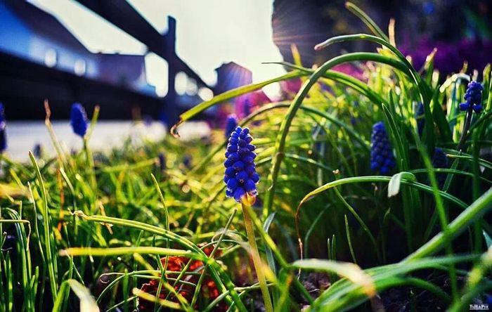 Spring Nature Garden Flowers