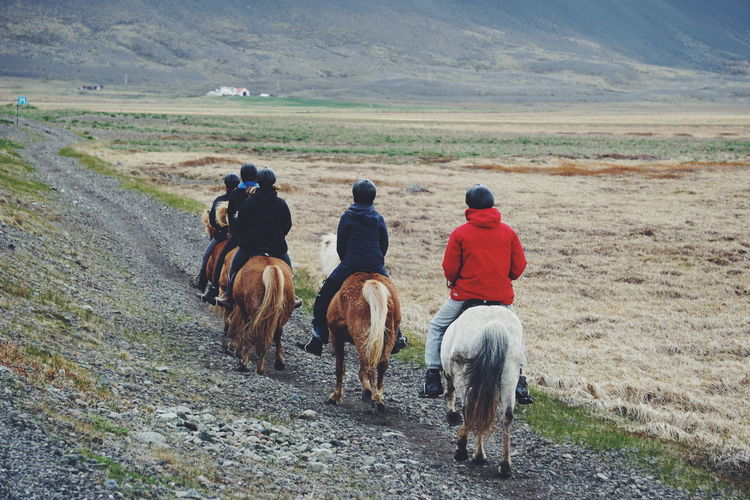 Riding Iceland horses Activity Adventure Horse Horseriding Iceland Iceland Trip Iceland_collection Icelandic Horse Leasure Activity Lifestyles Riding Unrecognizable People Unrecognizable Person The Great Outdoors - 2017 EyeEm Awards The Great Outdoors - 2017 EyeEm Awards Neighborhood Map Connected By Travel