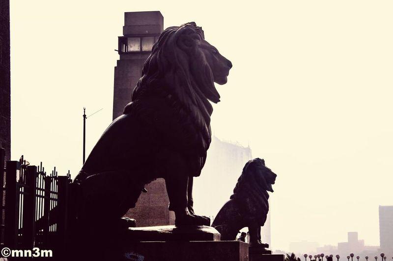 مصر القاهرة Ciro Egypt Lion Qasr Al_nil