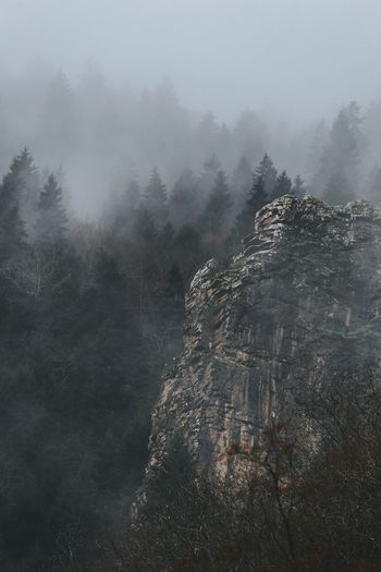 Scenic view of trees and mountains in forest during foggy weather