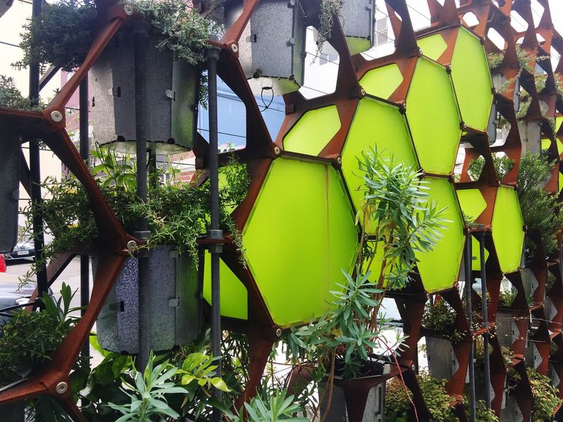 Living garden wall in the city Growth Plant Green Color Garden City Garden Garden Wall Living