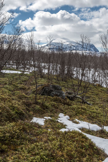 Springtime in Abisko Abisko Bare Tree Beauty In Nature Cloud - Sky Cold Temperature Day Field Grass Landscape Nature No People Outdoors Scenics Sky Snow Sweden Tranquil Scene Tranquility Tree Water Winter