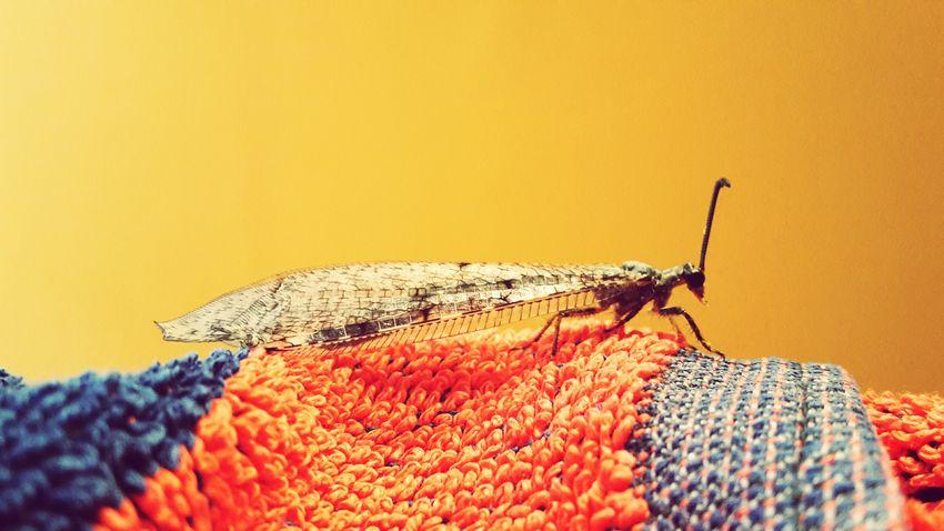 Tier Fliegen Animal Handtuch