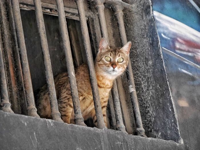 Istanbul EyeEm Best Shots Street Life Cats Streetphoto_color Cat The Street Photographer - 2015 EyeEm Awards Pets Corner