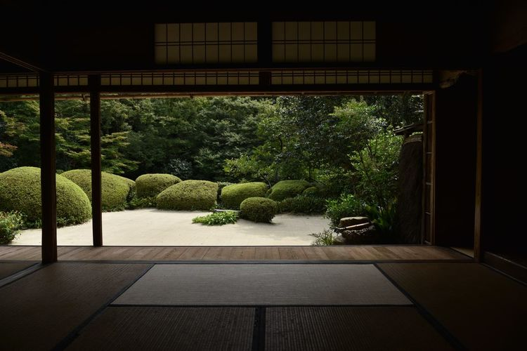 Light And Shadow Japan Plant Tree Architecture Indoors  Built Structure Nature No People Green Color Front Or Back Yard