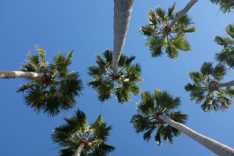 Beauty In Nature Blue Blue Sky Branch Clear Sky Day Growth High Low Angle View Nature No People Outdoors Palm Tree Sky Tree Tree Trunk