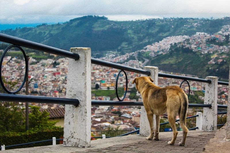 Architecture Cityscape Day Dog Ecuador Equality Mountain Nature No People One Animal Outdoors Panecillo Quito Sky Travel View Miles Away