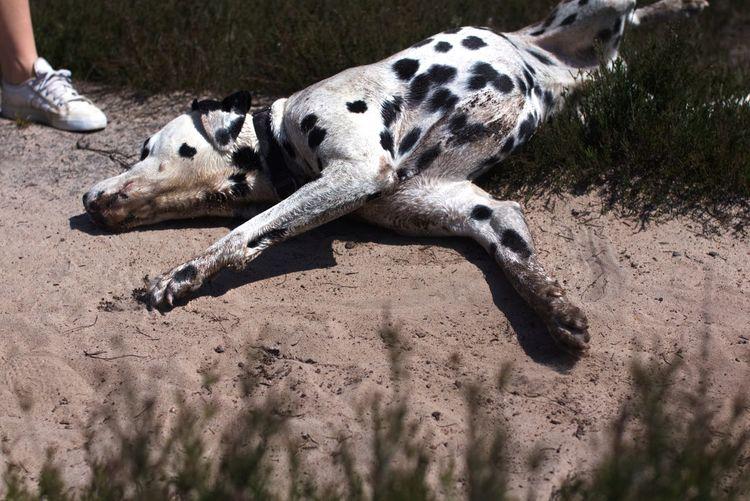 Animal Themes One Animal Animal Land Vertebrate Sand Sunlight