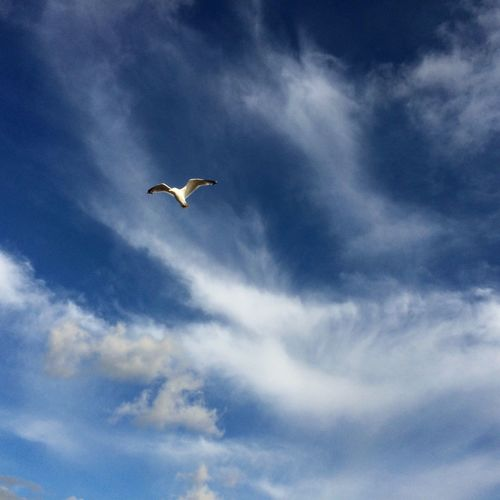 Low Angle View Of Seagull Flying In Cloudy Sky