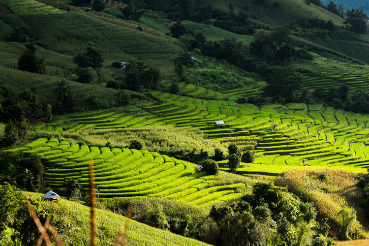 Rice terraces in the Thailand and The village is in a valley among with Rice cultivation in the North of the Thailand Farm Nature Rice Thailand View Beauty In Nature Field Green Color Land Landscape Landscapes Light And Shadow Mountain Nature No People North Outdoors Plant Rice Terraces Village