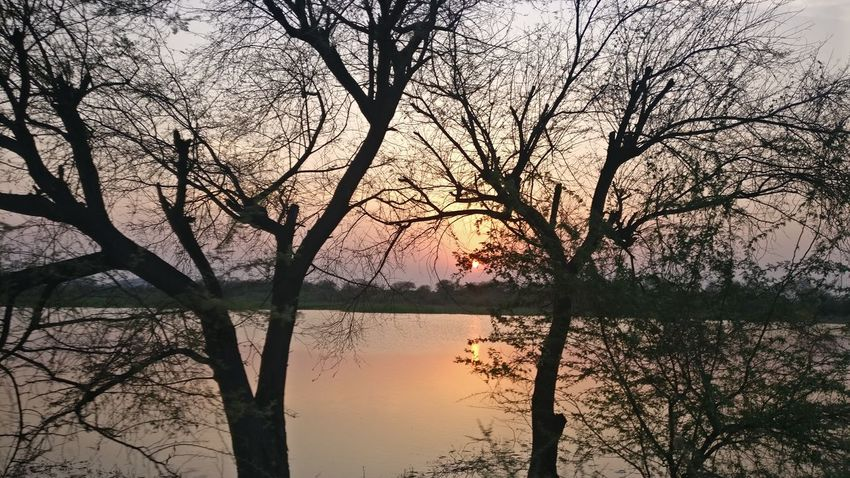 Outdoors Tree Silhouette Nature Sunset Branch Reflection Beauty In Nature Sky Scenics Tranquility No People Day Lake Water Bare Tree Close-up Beauty In Nature Green Color Tree Yellow Nature The Photojournalist - 2017 EyeEm Awards