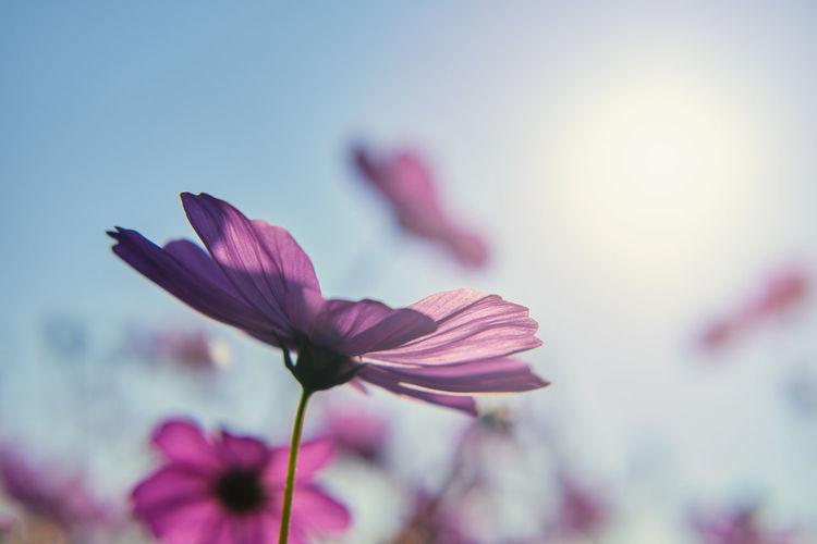 Purple flowers under blue sky of sunny day