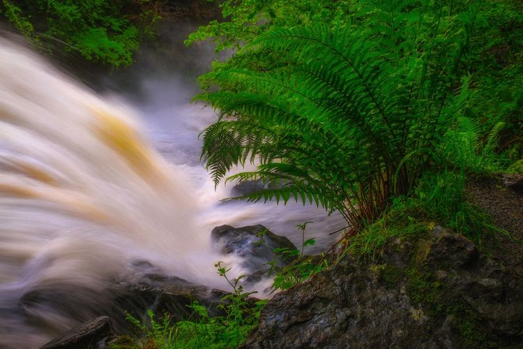 Waterfall Country Water Waterfall Motion Green Color Grass Long Exposure Stream Flowing Water Countryside Rapid