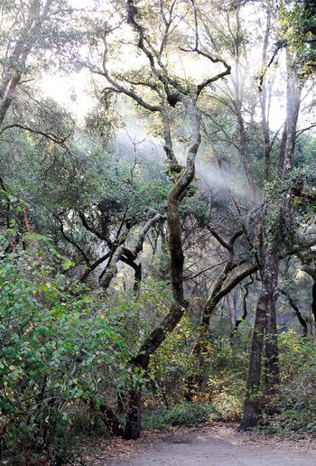 Wandering Foggy Landscape Adventure Exploring Pnwexplorations Pnwanderlust Light Through The Trees Trees And Sun Morning Light