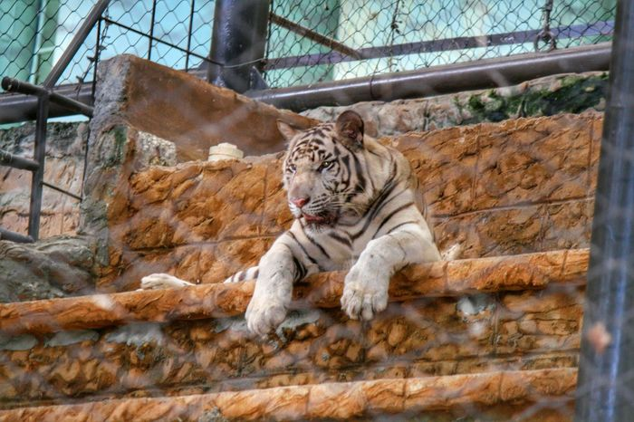 Hdrphotography Hdr Photography Hdr_Collection Trinidad And Tobago Tiger Cat