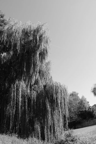 Arbre Beauty In Nature Black & White Black And White Black And White Photography Day Growth Low Angle View Nature No People Noir Et Blanc Noir Et Blanc Photographie Outdoors Sky Tree