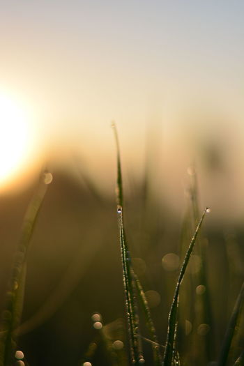 Close-up of dew on plant at sunset