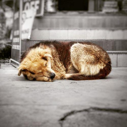 Cat sleeping on footpath