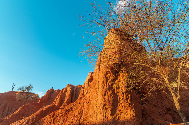 Low angle view of bare tree by cliff against sky at tatacoa desert