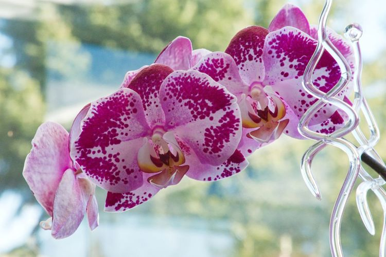 Flower Flowering Plant Plant Beauty In Nature Freshness Vulnerability  Fragility Close-up Growth Petal Pink Color Inflorescence Focus On Foreground No People Flower Head Day Nature Pollen Orchid Outdoors